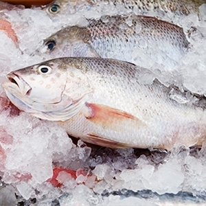 Picture for category FROZEN SEAFOOD