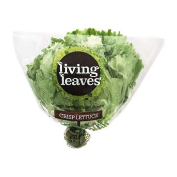 Picture of Living Leaves Lettuce Head Pack